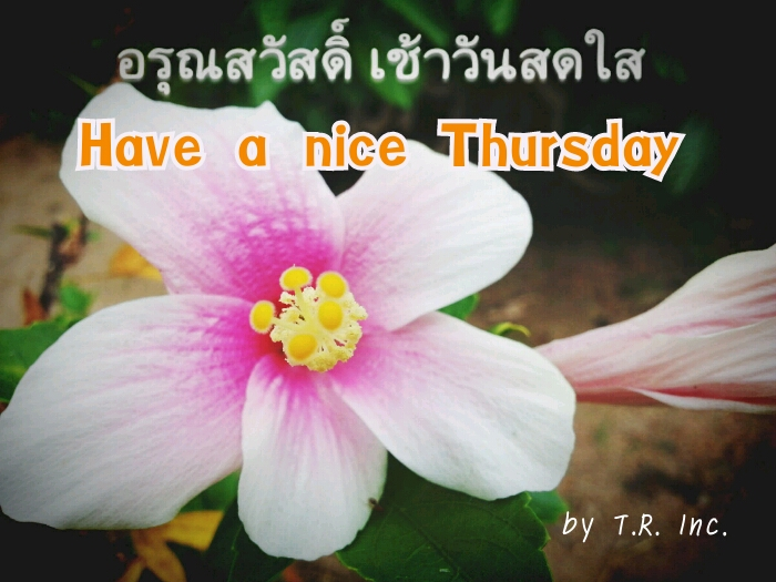 Have a nice Thursday