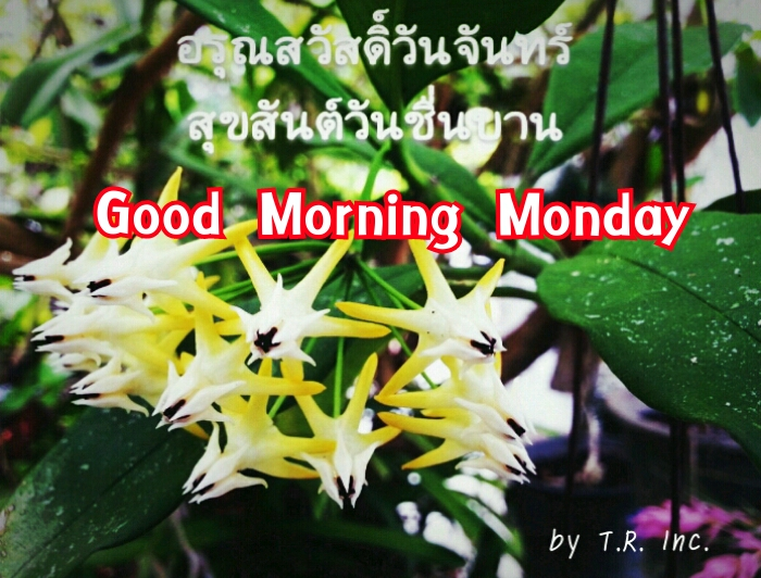 Good Morning monday