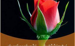 เพียงหนึ่งดอกที่มอบให้  เติมหัวใจให้สุขสันต์